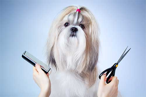 Dog groomer wayne nj, long haired dog shown with comb and scissors